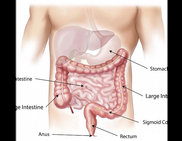 Transplantologia