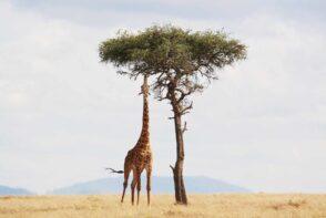 10 Najważniejszych Afrykańskich Wynalazków